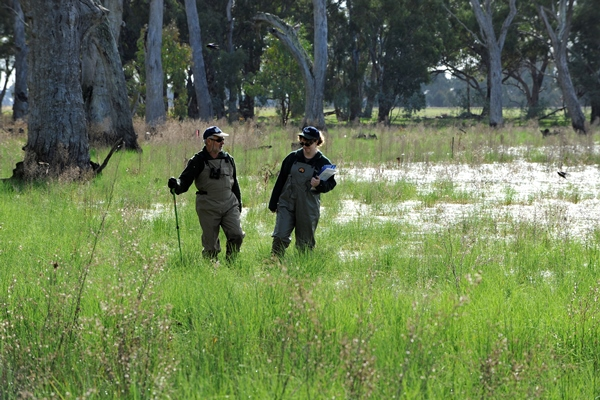 Two researchers undertake field studies in a wetland area, both wearing waders they are surrounded by grass and trees.