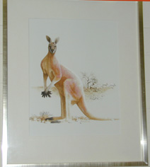 Megaleia Rufa  Red Kangaroo by Frank Knight