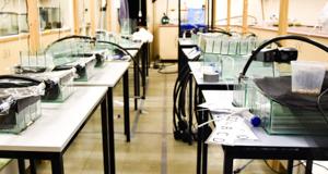 Freshwater Ecology Laboratory