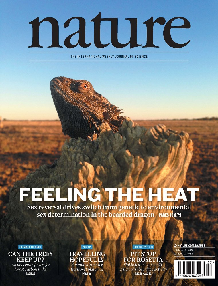 The cover of the journal Nature featuring a bearded dragon and the UC article on sex-switching among these lizards