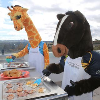 Sporting mascots Cappie the Giraffe and Brumby Jack cook bacon and eggs on a BBQ at Cooper Lodge