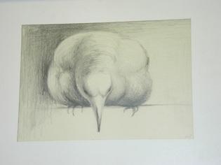 Jan Brown's bird