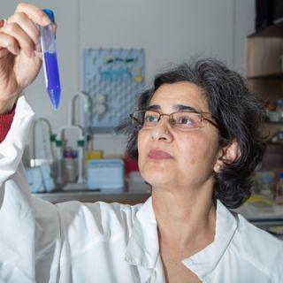 UC Associate Professor Reena Ghildyal at work in her lab