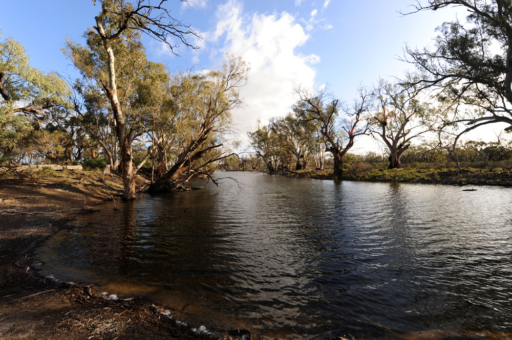 An Australian river with eucalypts