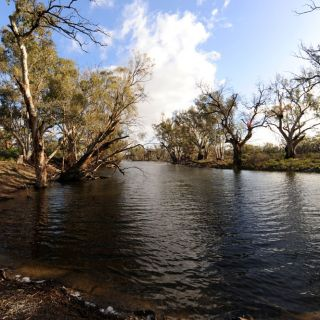 An Australian river with eucalypts