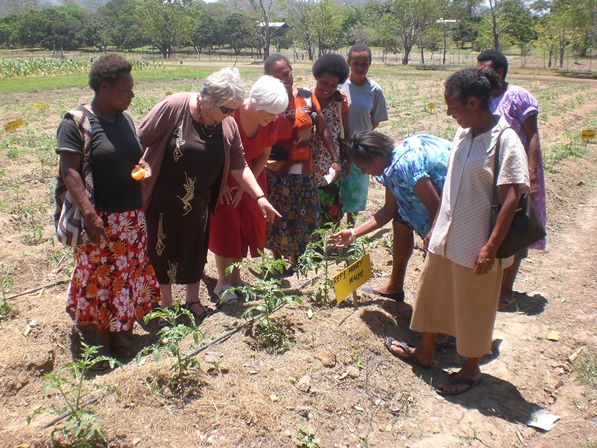 A group of women including University of Canberra researchers inspect tomato plants at a small farm plot in a PNG community.